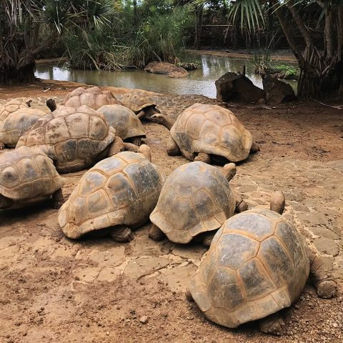 Mauritius-Casela Nature Park-Clara Travels